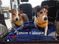 Samson and Wallace